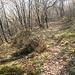 tratto del sentierino che scende dal Panigas sino a collegarsi col sentiero che va all'Eremo