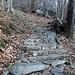 <b>Mi incammino alle 8:10, con una temperatura dell'aria di soli 1,5°C, su un dolce sentiero che si sviluppa in un bosco misto di castagni e betulle. </b>