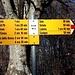 <b>Proseguo nella faggeta in direzione NO fino al corte successivo chiamato dalla carta topografica Sassalto (1182 m), Sassalp dal segnavia, Sesciálp in dialetto. </b>