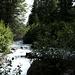 Der Bach Val da Camp hat immer viel Wasser<br />