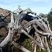 Spinnen-Wächter