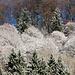 Bäume frisch gepudert unter dem Höchhand