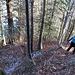 Waldabstieg zum Grossboden. Der Schwungansatz für die Linkskurve sitzt. Die Grödel konnten im Rucksack bleiben.