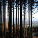 Durch den Wald zum Dürren Bichl