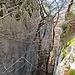 Blick in den schattigen Teil vom Klettergarten Ramsflue.