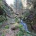 Am Bach entlang führt ein Weg am Ostgrat der Geissflue vorbei. Ich stieg in der Mitte der Ostflanke über steilen Waldboden auf.