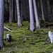 Zwischen etwa 1200m und 1400m war der Waldboden märchenhaft von Moos überzogen. Unter dem Moos ist der Hang von Steinblöcken übersät, die auf  einen mächtigen Bergsturz vor langer Zeit hindeuten.