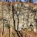 Geologischer Aufschluss, die gestauchten Schichten sind aus Phyllit, das glattere Gestein Diabas (in traditioneller Auslegung)