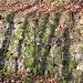 Ausgeführt von Hand als Trockenmauer mit Umgebungsgestein Und heute? Bohrpfähle, Felsanker, 1 m starker Beton, natürlich natursteinverblendet - kostet: so ca 1,5 - 2 Mio € pro 500 m.