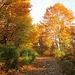 Sulla mulattiera sterrata che da Rivera sale all'Alpe Foppa, i colori dell'autunno dominano la scena.