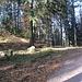 Am Sattelpunkt zwischen Brockenfelsen (Weg nach links) und Falkenfelsen (Weg nach rechts).