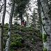 Nun sind wir am Hang des Rockertkopfs (642 m). Es ist der Berg mit dem lässigsten Namen im (mindestens!) Nordschwarzwald. Der Weg führt an der Spitze seiner Nordnase herum und exakt an dieser Stelle ist es nun Zeit, sich links hoch weglos ins Unterholz zu schlagen. Denn weiter oben, mittig auf dem Bergrücken verläuft ein in den Bäumen versteckter Granit-Grat. Und den hat Nik im Vorfeld bereits mal erkundet. Wir sind gespannt.