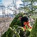 Trittsicherheit ist dennoch vonnöten, es liegt viel Totholz herum und die Spalten zwischen den Felsen sind teils tief und auch mal versteckt unter Blattlaub.