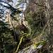 Besagte Wegkurve bringt uns nun nördlich weiter, wir treffen wieder auf die Gernsbacher Runde und gehen auf ihr nordwestlich-westlich (dabei lassen wir aus Zeitgründen leider diesen schönen Felsen aus) ...