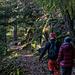 Zurück zum Pfad und links/westlich weiter durch den herbstlichen Wald, die Wegführung ist hier urigst angelegt ...