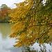 Herbstimpressionen am Hinterbrühler See