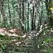 Hier stösst der Gratweg auf den Wanderweg, der von Mandach und Röt über eine Treppe zur Gratkante aufsteigt.