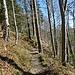 Der Steig führt durch die steile Flanke hinunter in die Ammerschlucht.