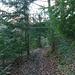 très beaux sentiers forestiers, pour la montée .