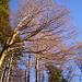 Entlaubte Bäume strahlen in der flachen Sonne