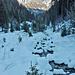Blick in den Nideggwald. Der Aufstieg war bis zur Alp Grimmi quasi angepistet.