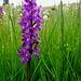 noch einmal treffen wir auf die farbintensiven Orchideen ...