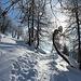 <b>Segue un secondo gradino, con pendenze importanti, fino a 33°, che mi permette di raggiungere il Piatto dei Larici, al limite superiore del bosco.</b>