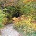 hinein in den Herbstwald