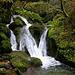 Der Ibach im Chaltbrunnetal hat unzählige kleine Wasserfälle und sein Bachbett sind fliesst vielerorts zwischen moosbewachsene Felsen hindurch wo auch etliche anderen feuchtigeitslebende Pflanzen anzutreffen sind.
