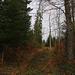 Vom Forstweg wanderte ich für die letzten Meter auf einem kaum begangenen Pfad zum Gipfel vom Littselchöpfli. Der Pfad verlor sich aber immer mehr im Wald, so dass ich zuletzt querfeldein den höchsten Punkt erreichte.
