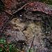 Geologische äusserst spannend ist der Schällbachponor (410m) auf der Karsthochebene westlich vom unteren Teil des Chaltbrunnetals. Hier versickert das Schällbächli an mindestens zwei Stellen im Wald in den Untergrund wie hier auf dem Foto wo das Wasser verschwindet.<br /><br />Der eigentliche Schällbachponor ist ein viel älterer fossiler Abfluss des Schällbächlis. Das zuvor verschwundene Wasser erreicht man am tiefsten Punkt der Höhle, wo es sich zu einem Siphon sammelt und später in der Röhrenquelle im Chaltbrunnetal zu Tage tritt. <br /><br />Der Schällbachponor ist mit einer Länge von 140m und einer Tiefe von 33m die tiefste Höhle dieses Karstgebietes und bildet mit seinen beiden Endhallen die grössten bekannten Hohlräume in diesem Gebiet. Der Eingangsbereich ist mit seinem Gangdurchmesser von 60x50cm und einer Länge von 8m eine Herausforderung. So wurde im September 1973 der Zugang durch eine Sprengung ermöglicht, und die zweite Halle wurde sogar erst im Jahr 2002 entdeckt.