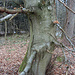 Baumwesen mit stylischer Stieflette, Monokel und einem Werkzeug(?) in der Pfote