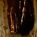 Durchblick<br />Fenster in die Elfenwelt
