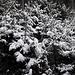 Weihnachtlich verschneiter Wald