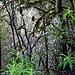 Dschungelartiger Wald auf La Gomera.