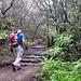 Weiter oben wird der Nebelwald etwas lichter, und ist geprägt von Farnen und Moos.