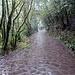Das letzte Stück verläuft auf der einsamen Straße runter nach El Cedro. Hier regnet es jetzt so richtig!