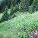 gut zu sehen, die Wegspuren im dichten Gras :-)
