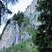 das Grasband, durch das der Aufstieg erfolgt; die Leiter ist rechts unten.