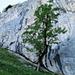 Baum auf dem Grasband