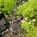 Klares Wasser vom moosgen Stein...