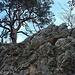 Foto der Tour vom 29.12.2020:<br /><br />Herrliche, aber einfache Kletterei unterhalb vom Gipfel des Bännlifels. Der Fels ist Fest und bietet beste Griffe und Tritte.<br /><br />