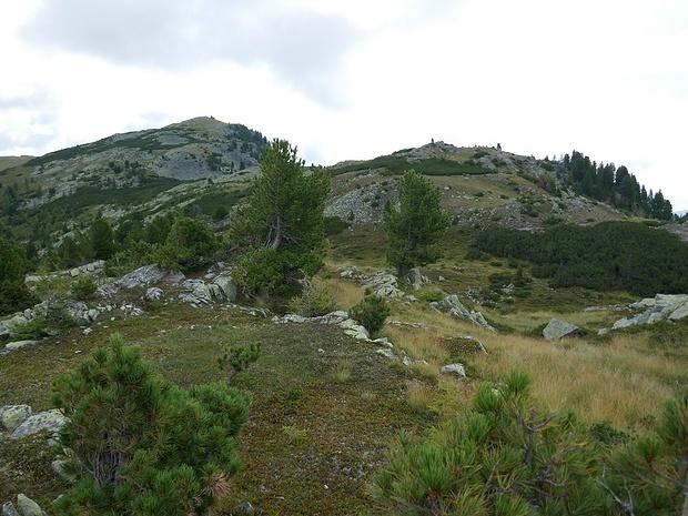 Unterwegs über dem Bergwald