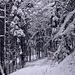 Tour vom 5.1.2021:<br /><br />Traumhaft verschneiter Wald beim Spaleneggli.