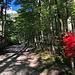 Logarska dolina - Im Wald geht's auf der ersten, kurzen Etappe unserer Tour zum Slap Rinka (Rinka-Wasserfall). Die späteren Bergziele, Ledinski vrh und Velika Baba, sind am Wegweiser bereits ausgeschildert.