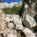 Im Aufstieg zwischen Logarska dolina und Okrešlj - Durch eine felsige Schlucht geht's nun neben der Savinja weiter aufwärts.