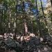 Im Aufstieg zwischen Logarska dolina und Okrešlj - Im Wald geht's weiter über felsigen Untergrund. Auch die ortsübliche Markierung ist hier einmal zu erahnen.