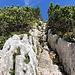 Im Aufstieg Okrešlj und Savinjsko sedlo - Durch eine kleine Felsrinne, kurz vor Erreichen des Sattels.