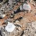 """Am Sattel beim Grenzstein XXII/268 - Vom Ledinski vrh sind wir wieder zum Sattel am Grenztein abgestiegen. Von hier gehts nun in Richtung """"Babe"""".  Es handelt sich übrigens nicht um ein Schweinchen, sondern wohl eher um die Mehrzahl von Baba..."""
