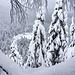 Größtenteils ist's recht bewaldet und natürlich alles zugeschneit. Insofern kann ich nur anhand der Steilheit vieler Partien mutmaßen, dass unterm Schnee wohl hier und da Felsstufen liegen. Ich beschließe, auf jeden Fall im Sommer nochmal wieder zu kommen und mich mal von unten hochzuarbeiten.